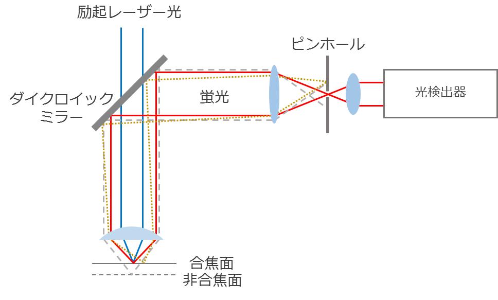 共焦点レーザー走査型顕微鏡_グラフィックス1