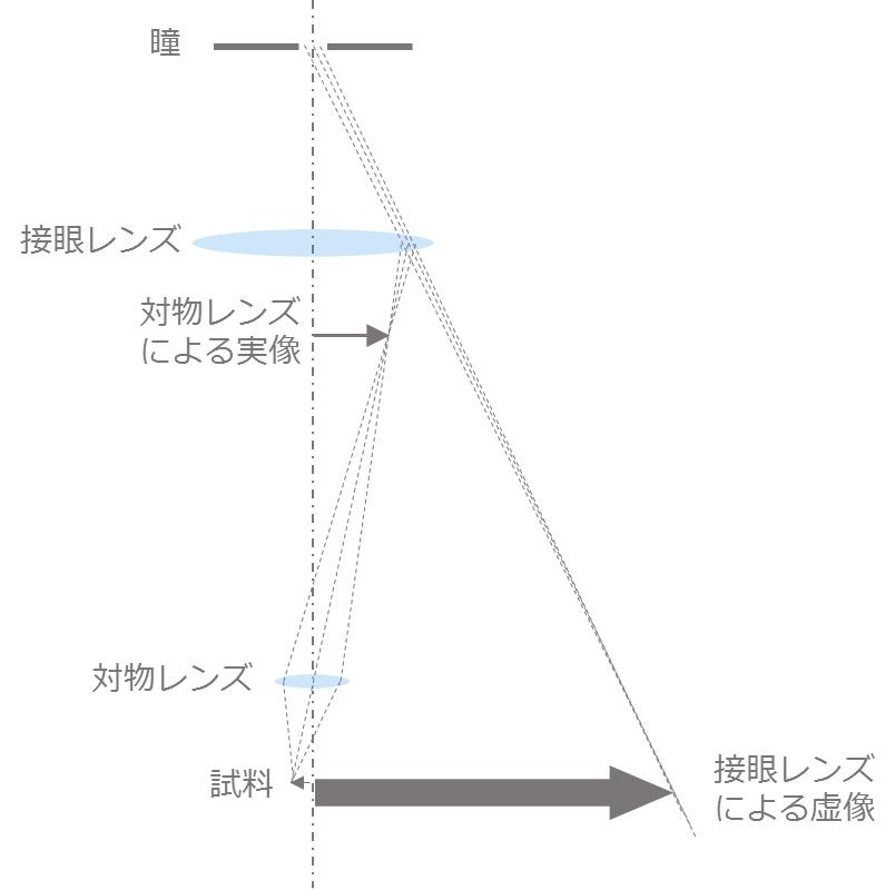 光学顕微鏡の基本構成_グラフィックス1