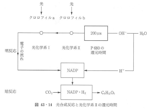図43・14