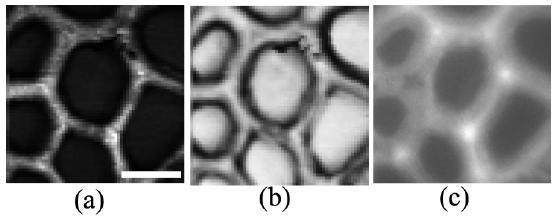 SPE顕微鏡のイメージング例